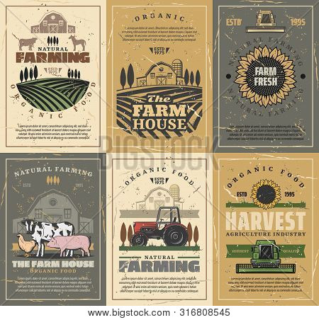 Agriculture And Farming Vector Design With Farm Field, Tractor And Barn, Cow Animals, Vegetables And