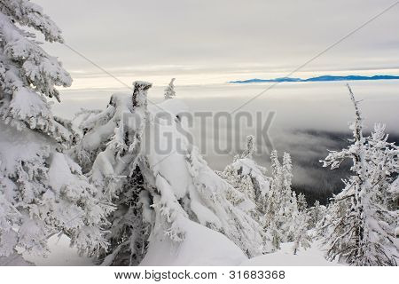 High Alpine Forest and Low Fog