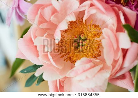 Photo Of A Dusty Pink Peony On A Blurry Background