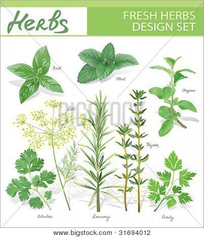 Fresh herbs. Vector design set.