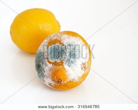 Spoilt Lemon On White Background. Close Up Objects