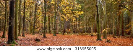 Panoramic Scene Of A Woodland In Beautiful Autumn Fall Colors