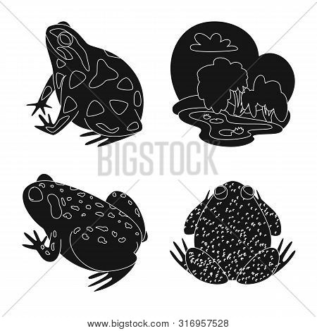 Vector design of fauna and reptile icon. Set of fauna and anuran vector icon for stock. poster