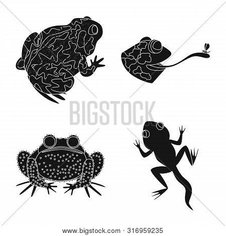 poster of Isolated object of fauna and reptile logo. Collection of fauna and anuran stock vector illustration.