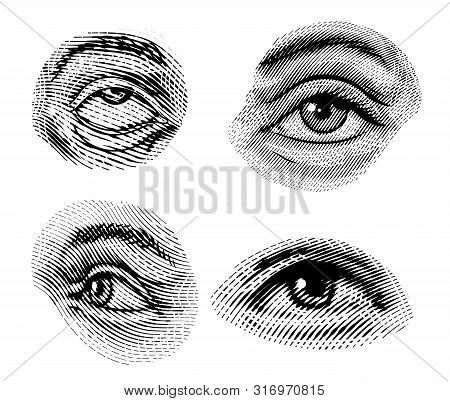 Human Eyes Looks Away In Vintage Style. Female Look And Eyebrows. Visual System, Sensory Organ Compo
