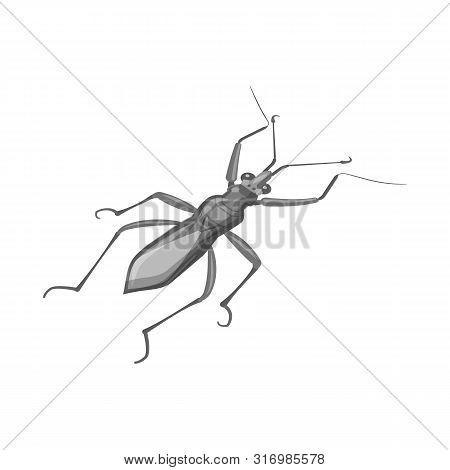 Vector Design Of Grasshopper And Beetle Logo. Set Of Grasshopper And Ant Stock Vector Illustration.
