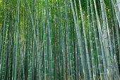 background of  arashiyama bamboo forest, Kyoto, Japan poster