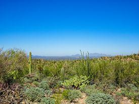 Desert Overlook In Saguaro National Park Tucson Arizona