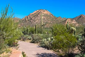Desert Mountain And Cactus By Visitor Center In Saguaro National Park