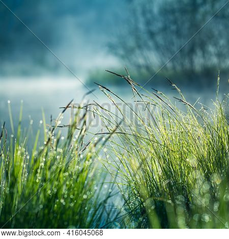 A Beautiful Flooded Wetlands During The Sunrise In Spring. Fress, Green Grass Growing In The Water.