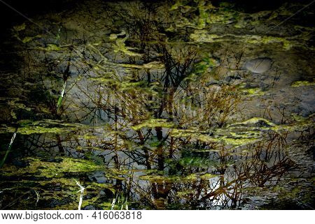 A Damp With Reflectin Of A Tree On Water Surface.
