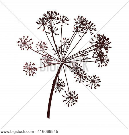 One Vector Branch Of Dill Seeds Is On A White Background