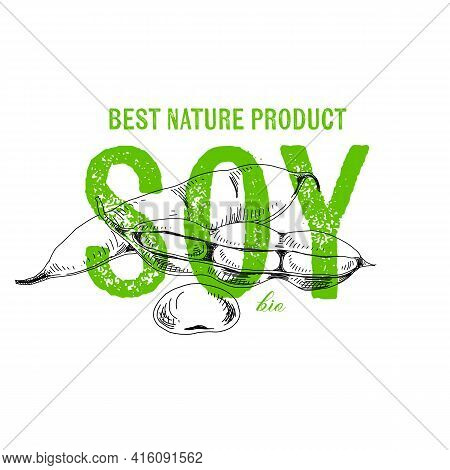 Soybean Pods, Retro Hand Drawn Vector Illustration.