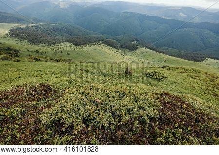 A Herd Of Sheep Grazing On A Lush Green Hillside