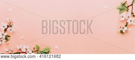 Sakura Background With Flower Blossom And April Floral Nature On Pink. Beautiful Scene With Blooming