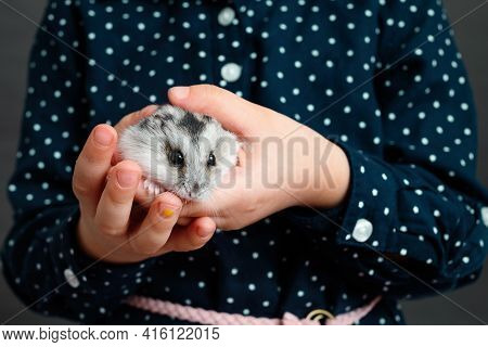 The Kid Holds A Grey Hamster In His Hands. Hands Of A Child With A Cute Djungarian Hamster.