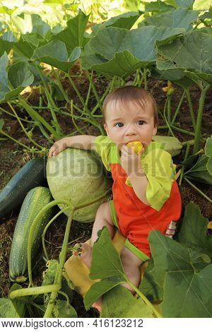 Portrait Of A Baby Who Is Among The Harvest Of Zucchini And Pumpkin.