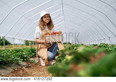 Front View Of Squatting Woman Wearing White Cap And Apron Is Holding Big Basket Of Strawberries. Cur