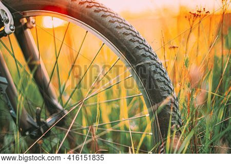 Bike Bicycle Wheel In Summer Green Grass Meadow Field. Close Up Detail. Sunset Sunrise Time Sunlight
