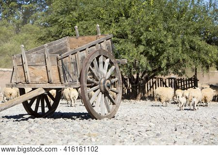Antique Vintage Wooden Horse Carriage With Goats In The Background. Farming Lifestyle In The North O