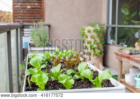 An Apartment Patio Garden, With Small Lettuces In A Planter And A Tower Garden With A Compost Column