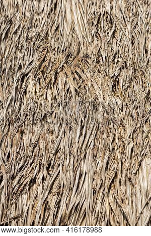 Closeup Of Sape Grass Roof, From Indigenous Tribe House Village Near Manaus, Amazonas State, Brazil