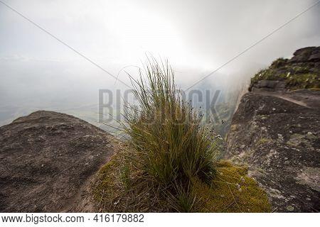 Close-up Of Endemic Grass At The Top Of Mount Roraima With Fog. Gran Sabana. Venezuela 2015.