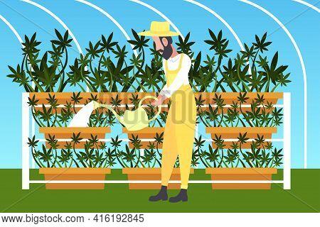 Man Farmer Watering Cannabis Industrial Hemp Plantation Growing Marijuana Plant Drug Consumption Agr