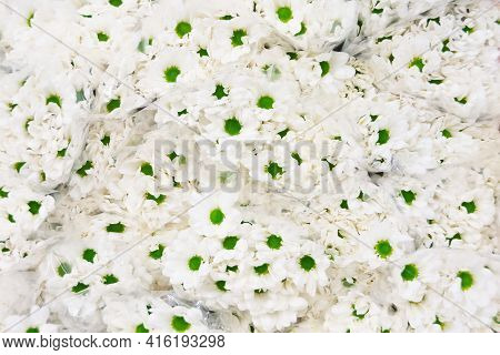 Lots Of Light Colored Chrysanthemums In Bouquets For Sale