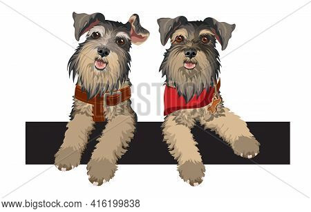Two Cute Schnauzer With Dog Collar And Red Bandana. Vector.