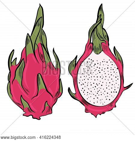 Dragon Fruit. Bright Colorful Exotic Pitahaya. Half And Whole Asian Fruits. Drawn Pitaya. Vector.