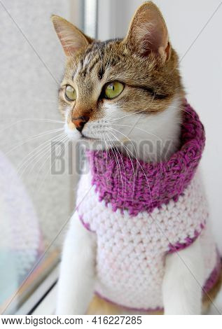 A Cute Cat In A Knitted Sweater With A High Collar Is Sitting By The Window. Funny Pet In Clothes.