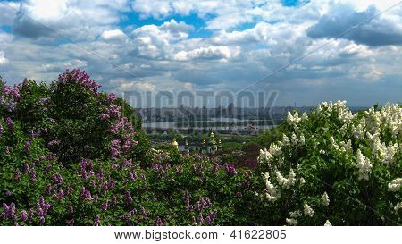 bushes of a lilac on a background of city of Kiyv