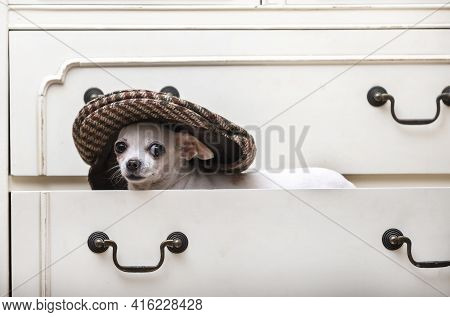 A Dog In A Stylish And Fashionable Beige Cap Stands On A Shelf In A Closet And Looks Carefully From