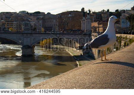 Ponte Vittorio Emanuele Ii Bridge, Rome, Italy