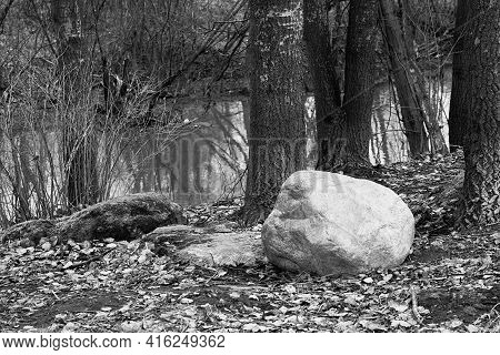 Abstract Landscape With A Large Stone On The Ground In The Woods On Black-white Photography Closeup