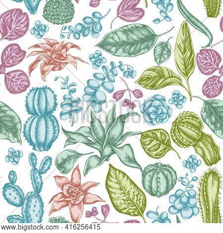 Seamless Pattern With Hand Drawn Pastel Ficus, Iresine, Kalanchoe, Calathea, Guzmania, Cactus Stock