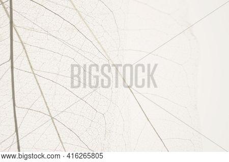 Skeleton Leaves Beige Background. White Skeletonized Leaf On Beige Background.skeletonized Leaf Text