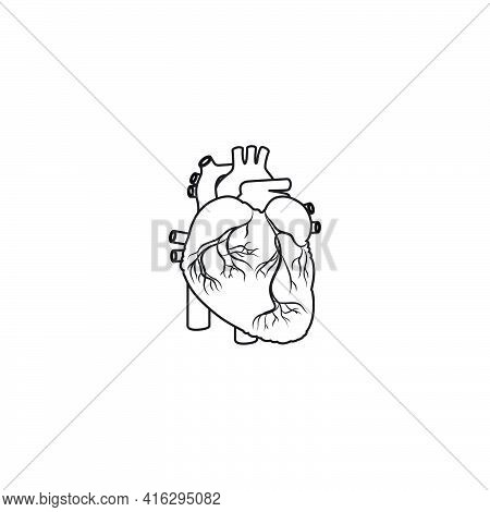 Modern Minimalistic Human Heart Line Icon Vector. Simple Heart Outline Sign For Human Anatomy, Medic