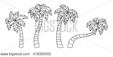 Coconut Palm Tree Doodle Cartoon Set. Tropical Black Line Palm Trees Design Element. Hand Drawn Tree