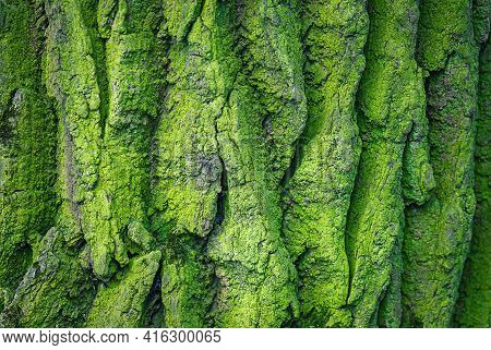 Green Rough Mossy Tree Bark Textured Background