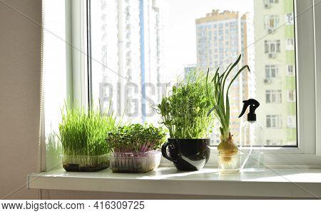 Micro-greens In A Box And Sprayer, Fresh Green Onions, Placed On The Windowsill.vitamins On Windowsi