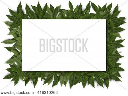 Blank Card With Green Fresh Cannabis Sativa Leaves(marihuana) Frame On White Background
