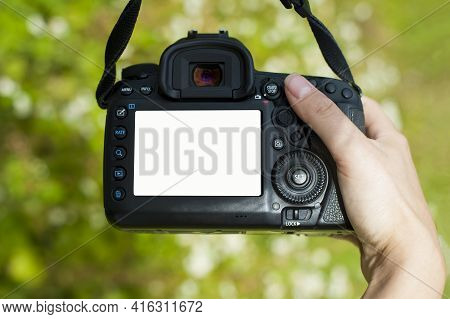 Hand Holds The Camera. Female Hands With A Camera, Holds To Photograph A Wild Flower, Green Backgrou
