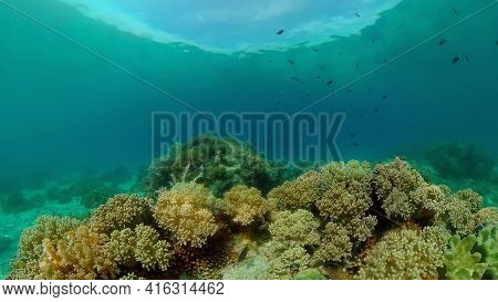 Tropical Fishes And Coral Reef Underwater. Hard And Soft Corals, Underwater Landscape. Travel Vacati