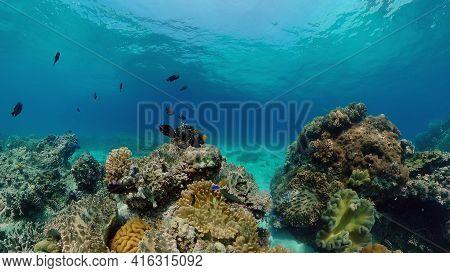 Underwater Scene Coral Reef. Hard And Soft Corals, Underwater Landscape. Travel Vacation Concept. Ph