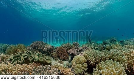 Tropical Colourful Underwater Seas. Coral Garden With Underwater Vibrant Fish. Underwater Tropical C