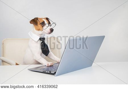 Dog Jack Russell Terrier In Glasses And A Tie Sits At A Desk And Works At A Computer On A White Back
