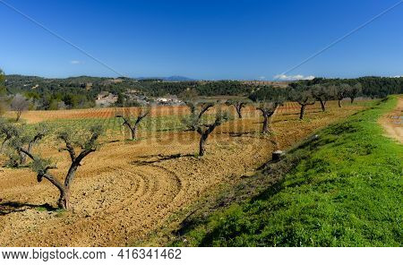 Part Of The Magnificent Vineyard Of Raventos, Catalonia
