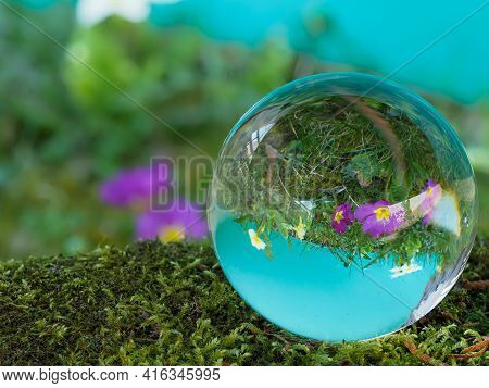 Sphere, Crystal Ball, Lens Ball With Purple And White Primrose On Moss Covered Stone And Cyan Backgr